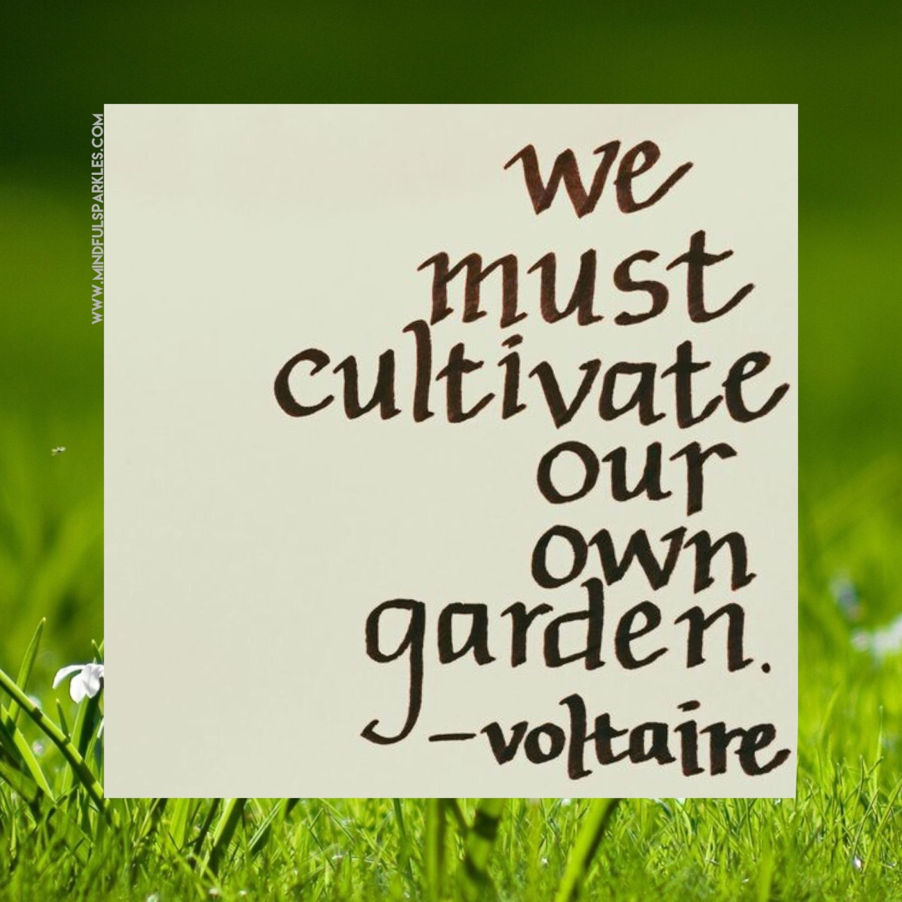 🌷We Must Cultivate Our Own Garden - Voltaire 🌿
